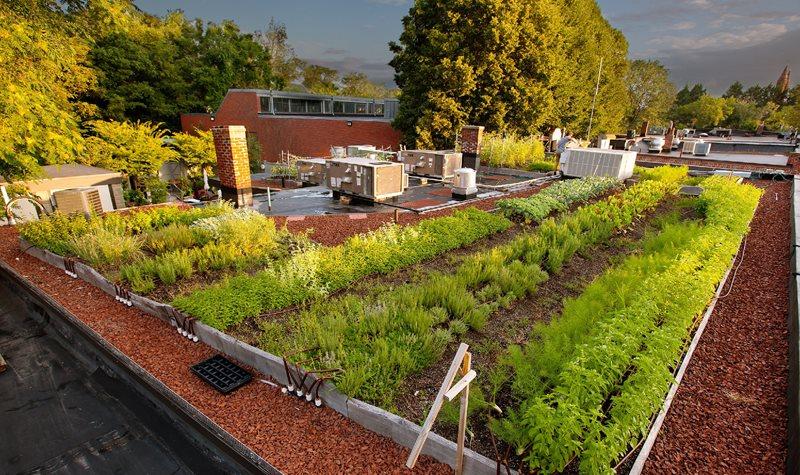 urban agriculture rezoning boston planning development agency. Black Bedroom Furniture Sets. Home Design Ideas